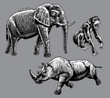 Elephant,Rhinoceros,Monkey,...