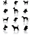 Dog,Silhouette,Great Dane,G...