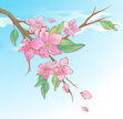Branch,Flower,Tree,Pink Col...
