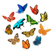 Butterfly - Insect,Vector,S...