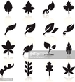 Silhouettes of leaves on white