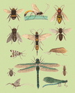 Bee,Animal,Insect,Ilustrati...