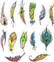 Feather,Color Image,Ilustra...