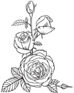 Bud,Rose - Flower,Romance,G...