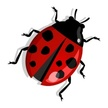 Ladybug,Isolated,Design Ele...