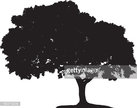 Tree,Oak Tree,Silhouette,Il...