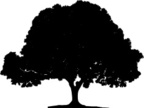 Fig Tree,Silhouette,Tree,Fi...