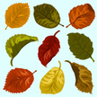 Leaf,Set,Autumn,Botany,Natu...