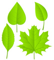 Leaf,Vector,Green Color,Spr...