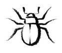 Insect,Symbol,Painted Image...