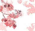 Almond Tree,Blossom,Pink Co...