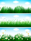 Grass,Butterfly - Insect,Fl...