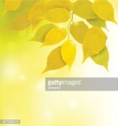 Nature,Plant,Yellow,Tree,Le...