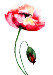 Watercolor Painting,Flower ...