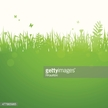 Scenics - Nature,Dawn,Grass...