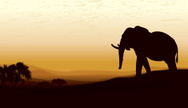 Silhouette,Elephant,Pachyde...