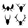 Moose,Antler,Animal Head,An...
