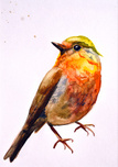 Bird,Watercolor Painting,Dr...