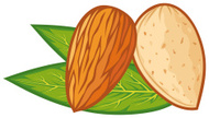 Almond,Leaf,Brown,Vector,Co...