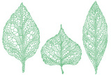 Leaf Vein,Leaf,Drawing - Ar...
