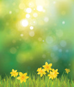Flower,Daffodil,Easter,Backgrounds,Frame,Illuminated,Steam,Ilustration,Grass,Springtime,Sky,Sun,Green Color,Defocused,Plant,Yellow,Shiny,Scenics,Landscape,Design,Sunny,Greeting,Nature,Leaf,Sunlight,Season,Petal,Vibrant Color,Blooming,Blossom,Beauty In Nature,Vector,Blossoming