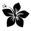 Flower,Plant,Black Color,Wh...