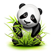Panda,China - East Asia,Ani...