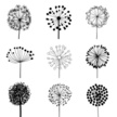 Dandelion,Single Flower,Flower,Silhouette,Vector,Blossom,Plant,Art,Black Color,Blossoming,Scribble,Ornamental Garden,Elegance,Pattern,Fragility,Blowing,Backgrounds,Deco,Nature,Cheerful,Tranquil Scene,Botany,Set,Beauty In Nature,editable,Paintings,Design Element,Fluffy,Happiness,Ilustration