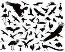 Silhouette,Back Lit,Bird,Duck,Owl,Dove - Bird,Flying,Falcon - Bird,Pigeon,Goose,Eagle - Bird,Swan,Hawk - Bird,Sign,Freedom,Isolated,Talon,Vector,Wildlife,Animal,Motion,Design,Seagull,Hunting,Set,Peacock,Flamingo,Collection,Gliding,Backgrounds,Crow,Claw,Abstract,Animals Hunting,Chicken - Bird,Feather,Symbol,Sky,White,Outline,Design Element,Nature,Crane,Wilderness Area,Wing,Shaved Head,Black Color,Animals In The Wild