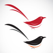 Magpie,Flying,Curve,Ilustra...