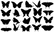 Insect,Black Color,Icon Set...