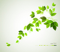 Freshness,Creativity,Bright,Backgrounds,Abstract,Design,Beauty In Nature,Ilustration,Green Color,Environment,Summer,Springtime,Season,Plant,Branch,Nature,Image,Leaf,Design Element