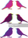 Bird,Color Image,Illustrati...
