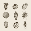 Animal Shell,Ilustration,Se...