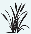 Cattail,Reed - Grass Family...