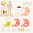 Stomach,Human Digestive Sys...