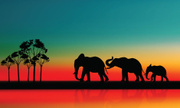 Elephant,Silhouette,Young A...