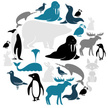 Animal,Silhouette,Puffin,Fo...