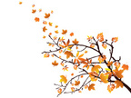 Branch,Autumn,Nature,Season...