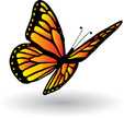 Butterfly - Insect,Vector,F...