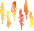 Feather,Watercolor Paints,W...