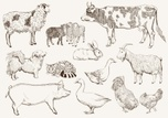 Livestock,Domestic Animals,...