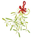 Mistletoe,Tendril,Berry Fru...