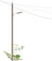 Pole,Power Line,Orchid,Ilus...