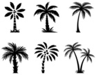 Palm Tree,Computer Icon,Sym...