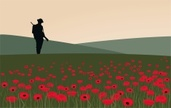 Poppy,World War I,Armed For...