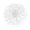 Dahlia,Flower,Single Flower,Engraving,Black And White,Wedding,Sketch,Chrysanthemum,Engraved Image,Monochrome,Floral Pattern,Vector,Drawing - Art Product,In A Row,Pattern,Striped,Back Lit,Silhouette,Tattoo,Isolated,Abstract,Computer Graphic,Ilustration,Single Object,White,Retro Revival,Outline,Human Hand,Stencil,Chamomile,Elegance,1940-1980 Retro-Styled Imagery,Greeting Card,Ornate,Daisy,Fashion,Contour Drawing,Pencil Drawing,Design,Painted Image,Style,Colors,Woodcut,Form,Drawing - Activity,Pencil,Black Color,Shape,Petal,Art,Decor,Design Element,Holiday,Pen,Backgrounds,Postcard,Decoration,Aster,Ink,Part Of