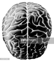 Right Cerebral Hemisphere,B...