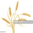 Rye,Decor,Food,Growth,Agric...