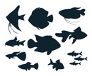 Fish,Isolated,Abstract,Anim...